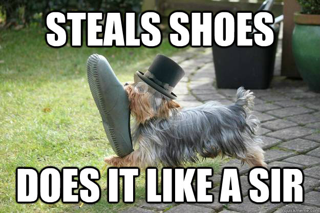 steals shoes does it like a sir - Classy Dog