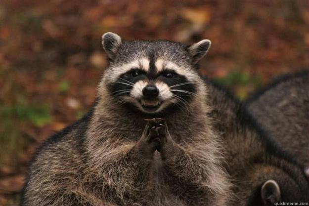 60 - Evil Plotting Raccoon