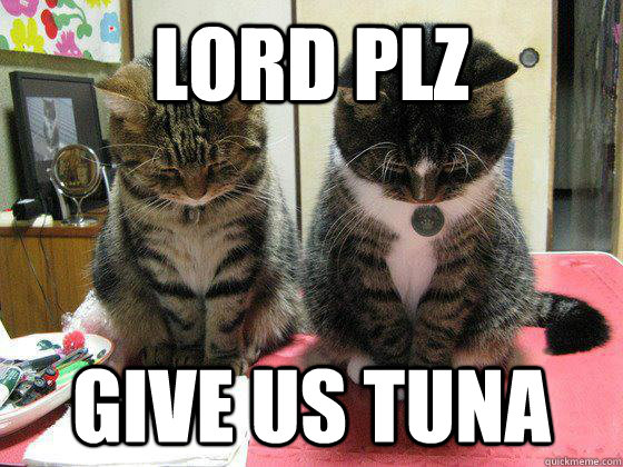 lord plz give us tuna - Praying cats