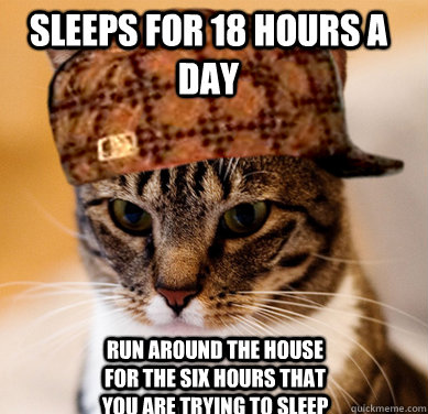 sleeps for 18 hours a day run around the house for the six h - Scumbag Cat