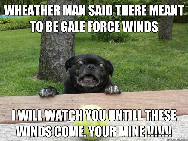wheather man said there meant to be gale force winds i will - Berks Dog