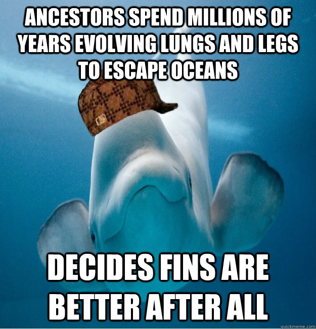 ancestors spend millions of years evolving lungs and legs to - Scumbag whale