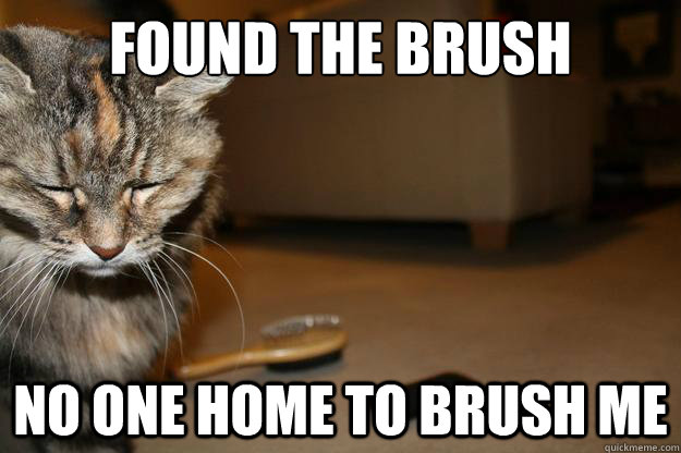 found the brush no one home to brush me - First World Cat Problems