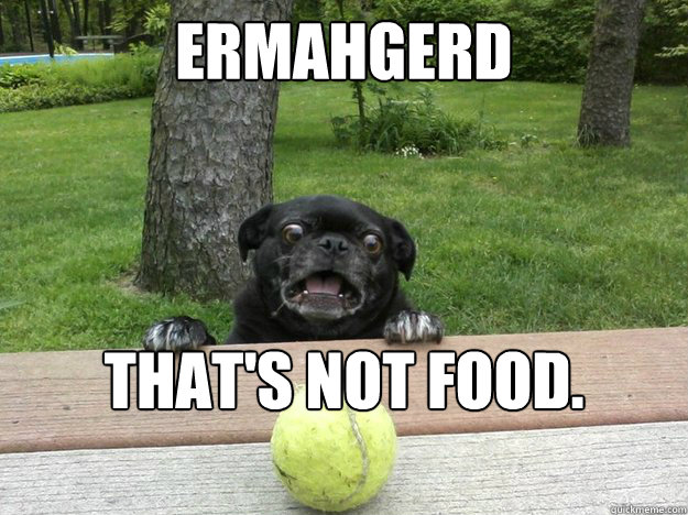 ermahgerd thats not food thats ball - Berks Dog