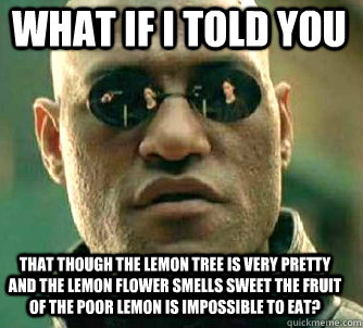 what if i told you that though the lemon tree is very pretty - Matrix Morpheus
