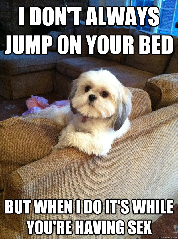 i dont always jump on your bed but when i do its while you - The Most Interesting Dog In The World