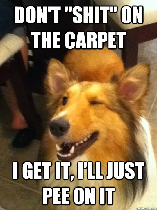 dont shit on the carpet i get it ill just pee on it - implying dog