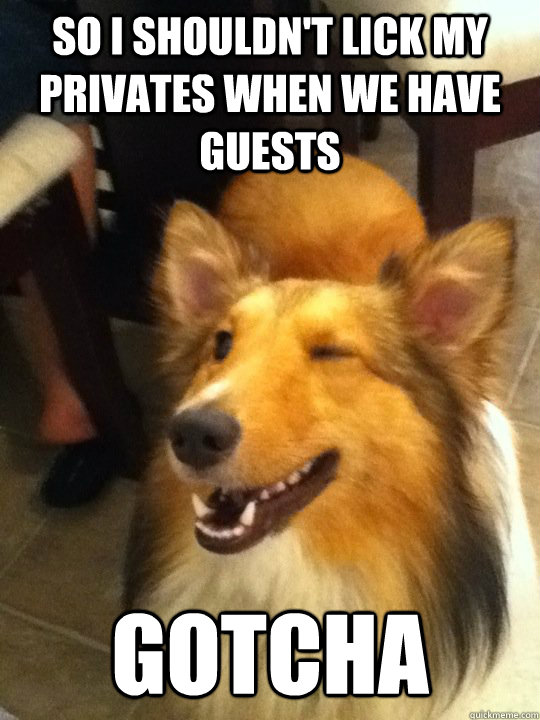 so i shouldnt lick my privates when we have guests gotcha - implying dog