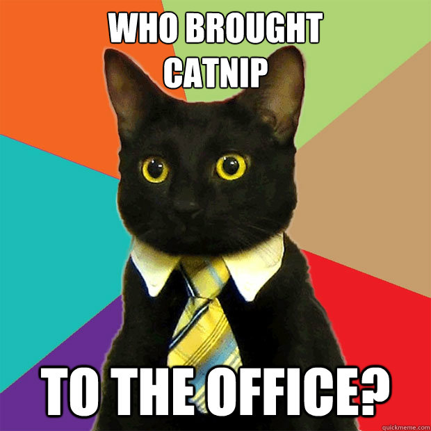 who brought catnip to the office - Business Cat