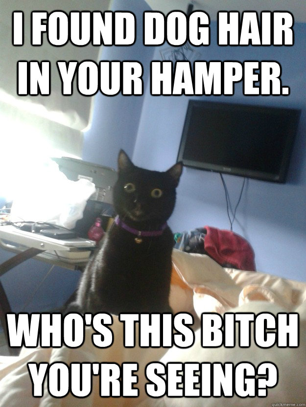 i found dog hair in your hamper whos this bitch youre see - overly attached cat