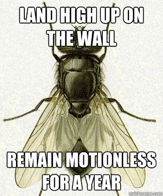 land high up on the wall remain motionless for a year - Fly logic