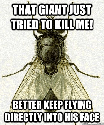 that giant just tried to kill me better keep flying directl - Fly logic