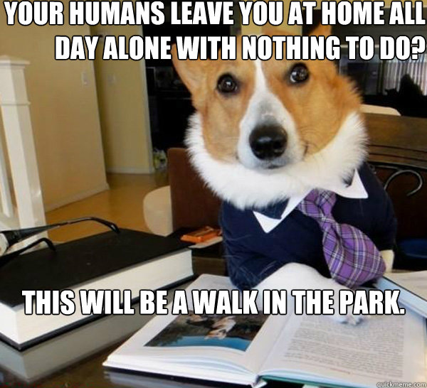 your humans leave you at home all day alone with nothing to  - Lawyer Dog