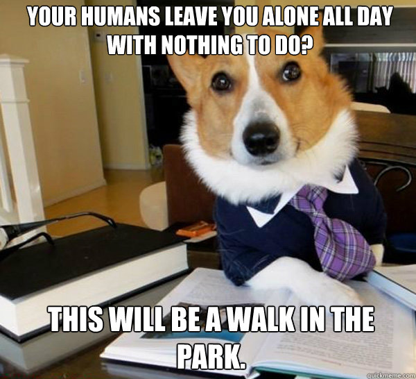 your humans leave you alone all day with nothing to do this - Lawyer Dog