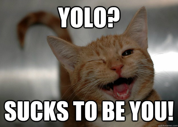 yolo sucks to be you - Sarcastic Cat