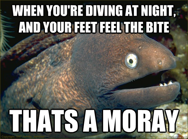 when youre diving at night and your feet feel the bite tha - Bad Joke Eel