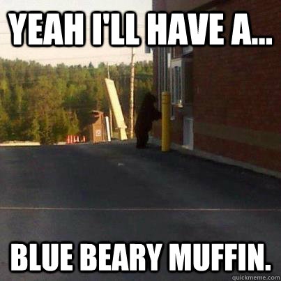 yeah ill have a blue beary muffin - Tim Hortons Bear
