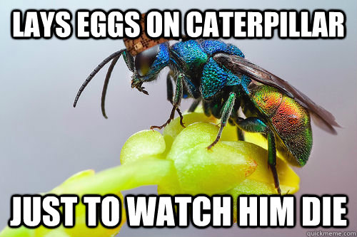 lays eggs on caterpillar just to watch him die - Scumbag Wasp