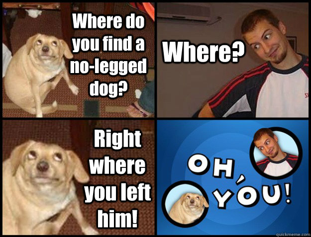 where do you find a nolegged dog where right where you le - Oh you!