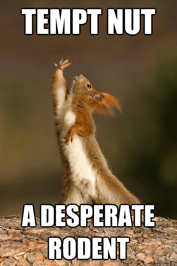 tempt nut a desperate rodent - Shakespeare Squirrel