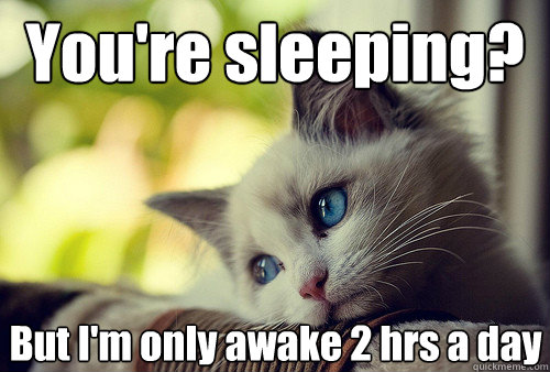 youre sleeping but im only awake 2 hrs a day - First World Cat Problems
