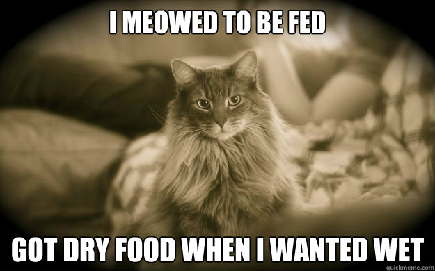 i meowed to be fed got dry food when i wanted wet - First World Issues