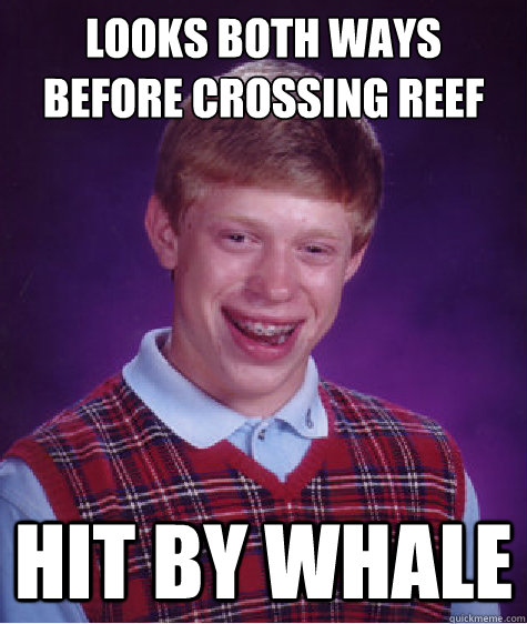 looks both ways before crossing reef hit by whale - Bad Luck Brian