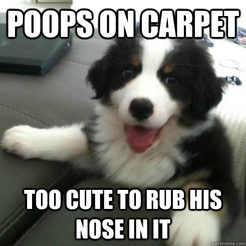 poops on carpet too cute to rub his nose in it - Ridiculously Photogenic Puppy
