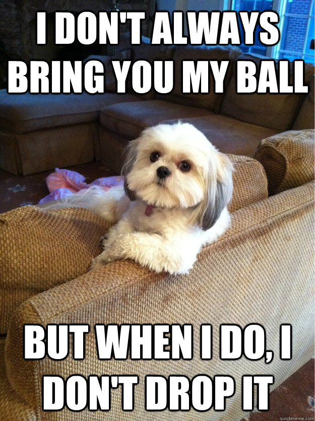 i dont always bring you my ball but when i do i dont drop - The most interesting Dog in the world
