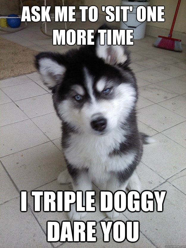 ask me to sit one more time i triple doggy dare you - Untrained Puppy