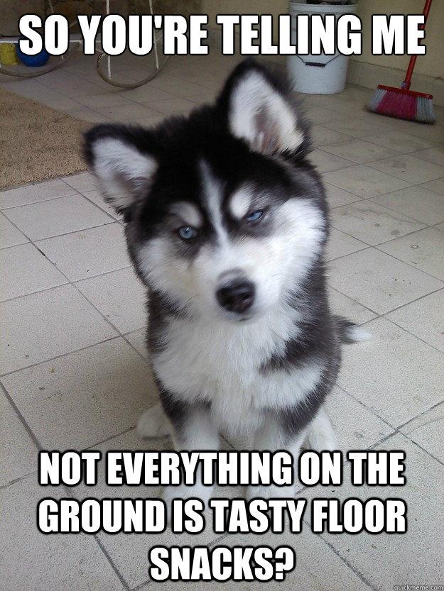annoyed husky meme - photo #5