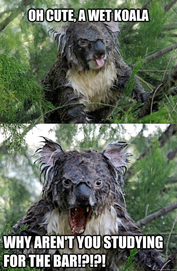 Pin Wet Koala on Pinterest