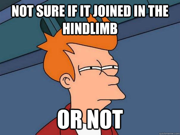not sure if it joined in the hindlimb or not - Futurama Fry