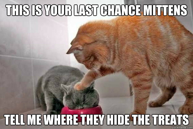 this is your last chance mittens tell me where they hide the - 