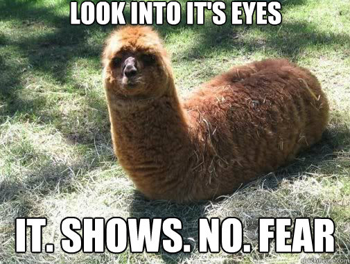 look into its eyes it shows no fear - Alpacapillar