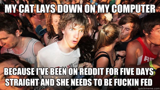 my cat lays down on my computer because ive been on reddit  - Sudden Clarity Clarence