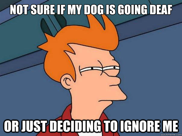 not sure if my dog is going deaf or just deciding to ignore  - Futurama Fry