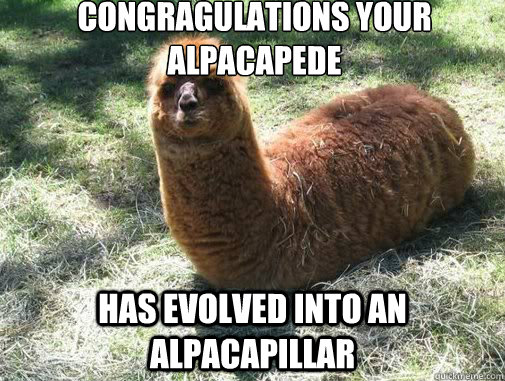 congragulations your alpacapede has evolved into an alpacapi - Alpacapillar