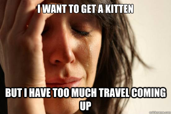 i want to get a kitten but i have too much travel coming up - First World Problems