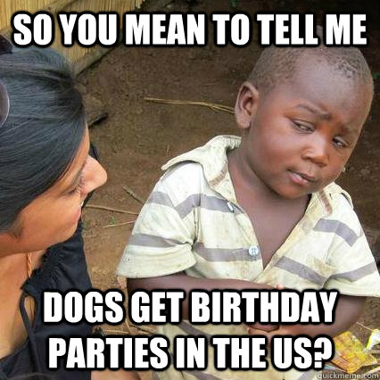so you mean to tell me dogs get birthday parties in the us - Skeptical African Baby
