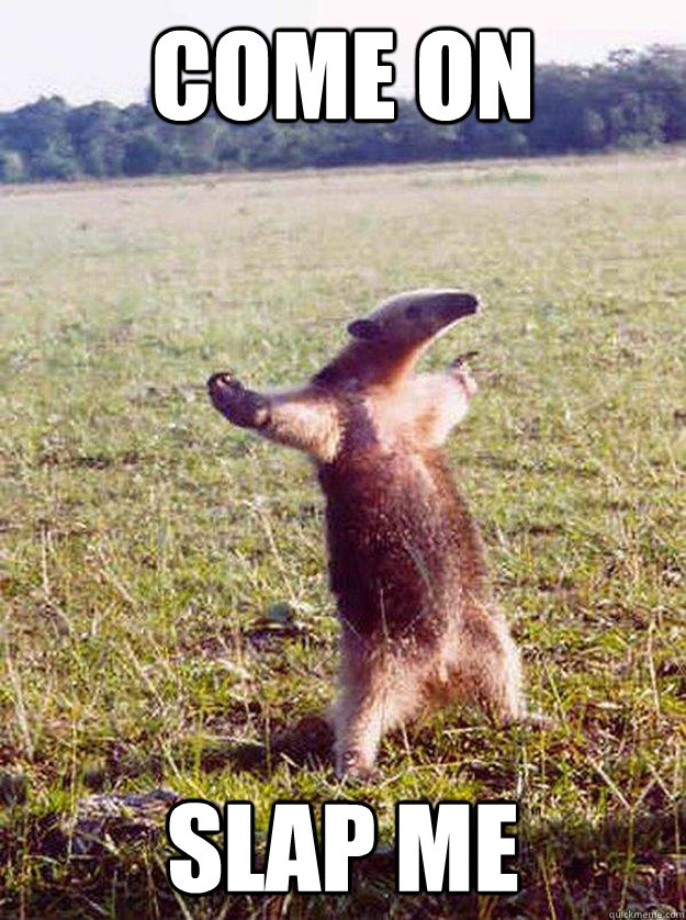 come on slap me - anteater bro