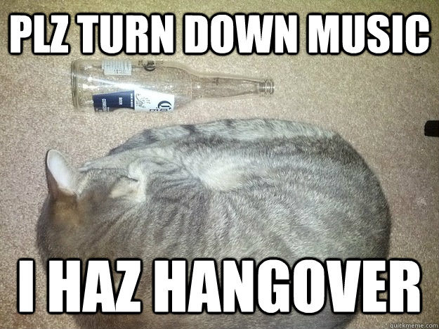 plz turn down music i haz hangover - hangover kitty