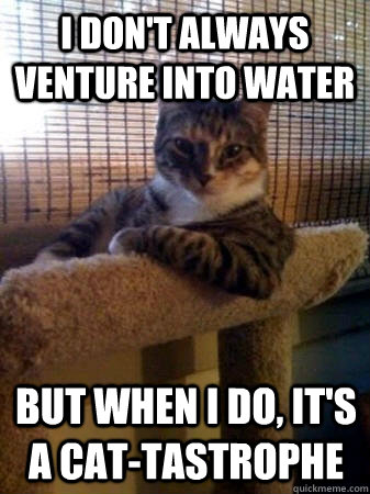 i dont always venture into water but when i do its a cat - The Most Interesting Cat in the World