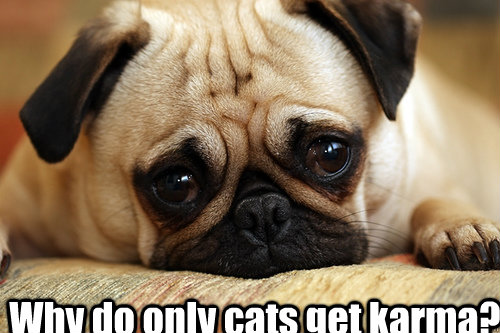why do only cats get karma - sad doggie