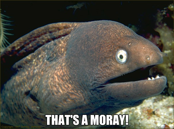 thats a moray - Bad Joke Eel