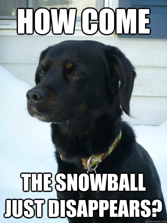 how come the snowball just disappears - Philosophical Puppy