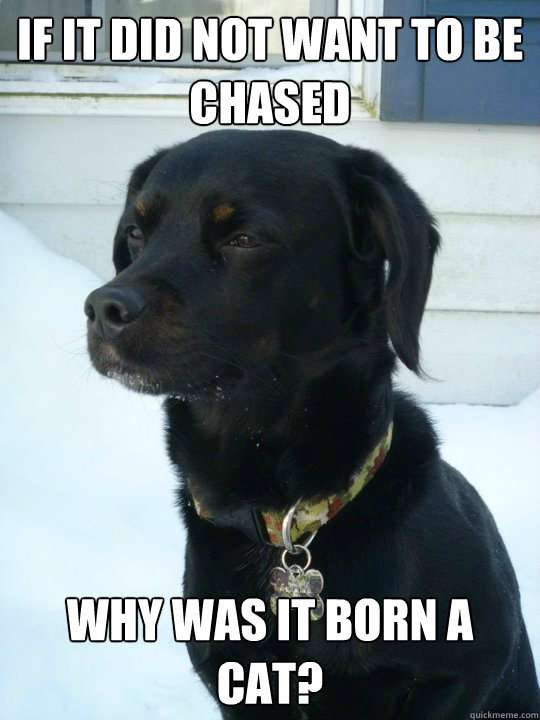 if it did not want to be chased why was it born a cat - Philosophical Puppy