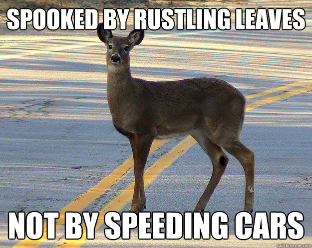 spooked by rustling leaves not by speeding cars - scumbag deer