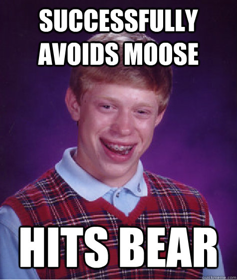 successfully avoids moose hits bear - BAD LUCK BRIAN