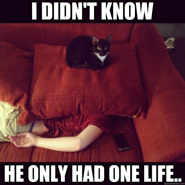 i didnt know he only had one life - jealous cat